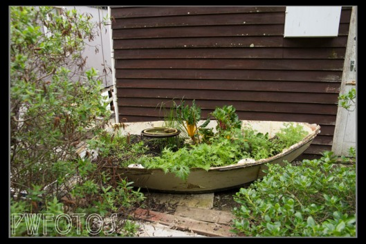 A creative use of an old dingy as a vege garden