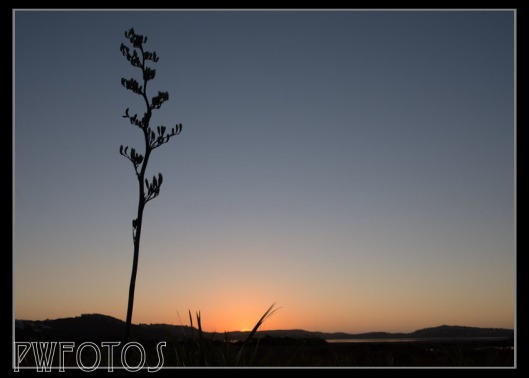 The 1000 day. Pauatahanui inlet at dusk