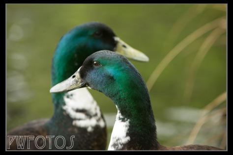 Birds-8
