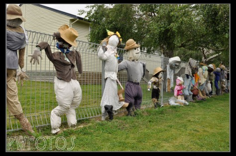 A collection of scarecrows adorn the school fence