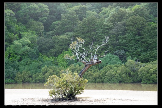 The east coast beaches contained mixtures of trees and mudflats. This shot was taken just north of Whangerei