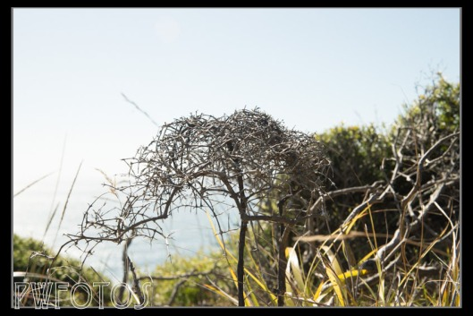 The environment on the Cape is very bleak and extreme and as a result the vegetation is stunted.
