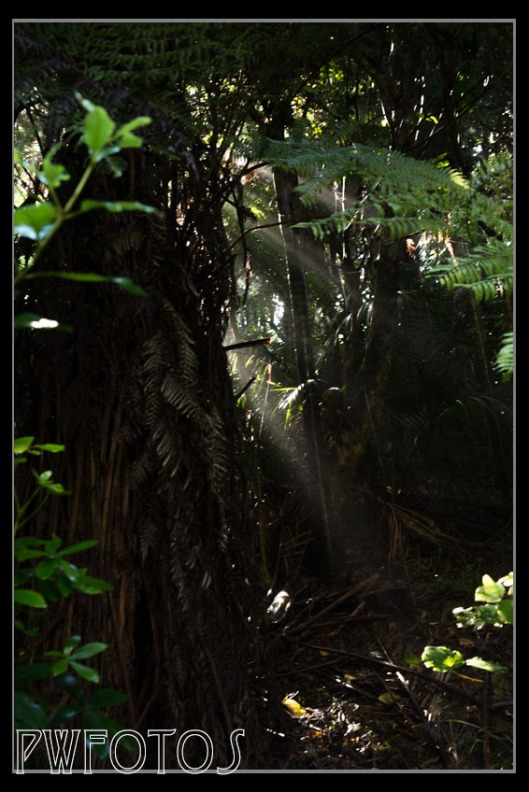 Light streams through dark bush