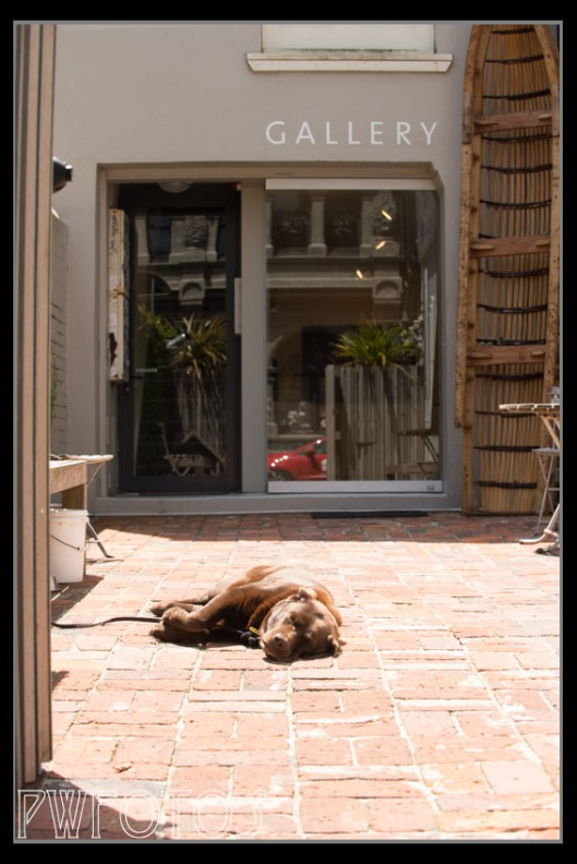 This dog was waiting to greet people in a small gallery in Vivian street that we didn't know existed.