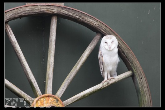 I just loved the combination of the owl and the wagon wheel.