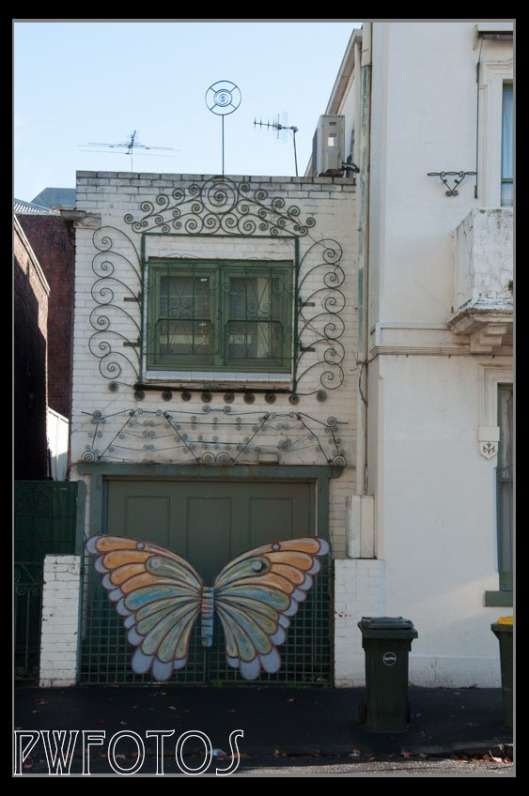 I have seen small butterflies on building but not one this size